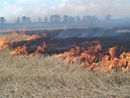 Картинки по запросу фото сгоревшего зернового поля